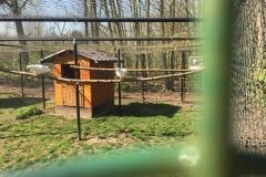 Animal farm - pigeons